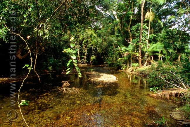 tropischer regenwald kologie kosystem bedingungen grundlagen probleme n hrstoffkreislauf. Black Bedroom Furniture Sets. Home Design Ideas
