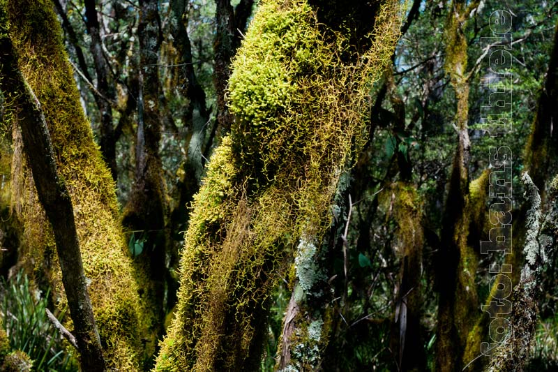 New england nationalpark gem igter regenwald for Boden im regenwald