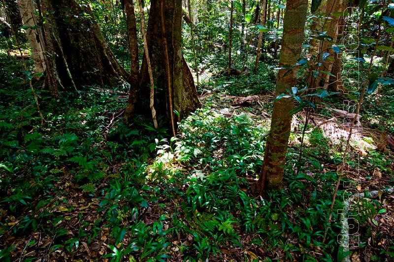Tropischer Regenwald Okologie Nahrstoffkreislauf Probleme